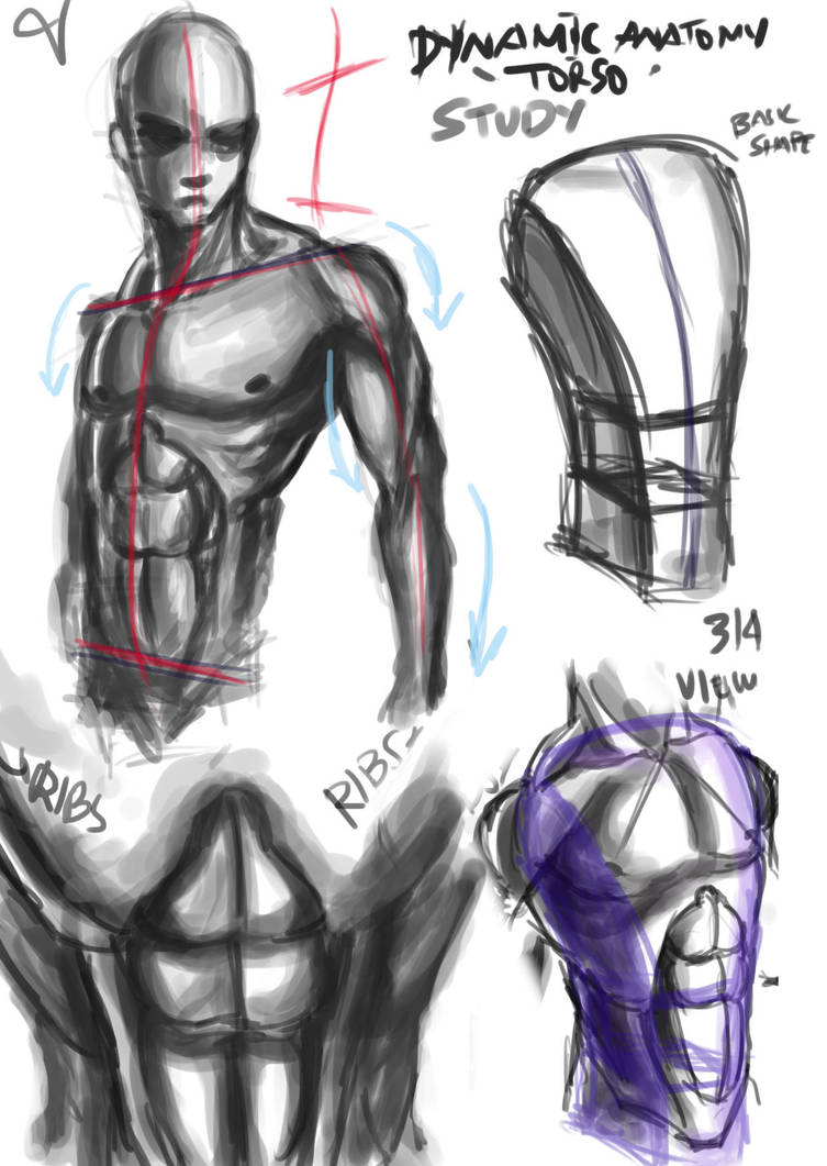 Dynamic Anatomy Studies By Lijohn321 On Deviantart