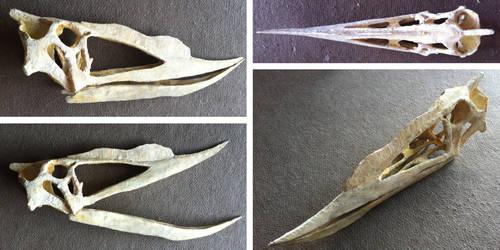 Dsungaripterid pterosaur (skull, foam sculpture) by helderdarocha
