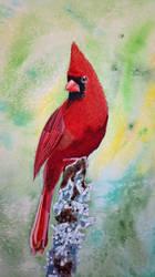 Cardinal by itsMillzie