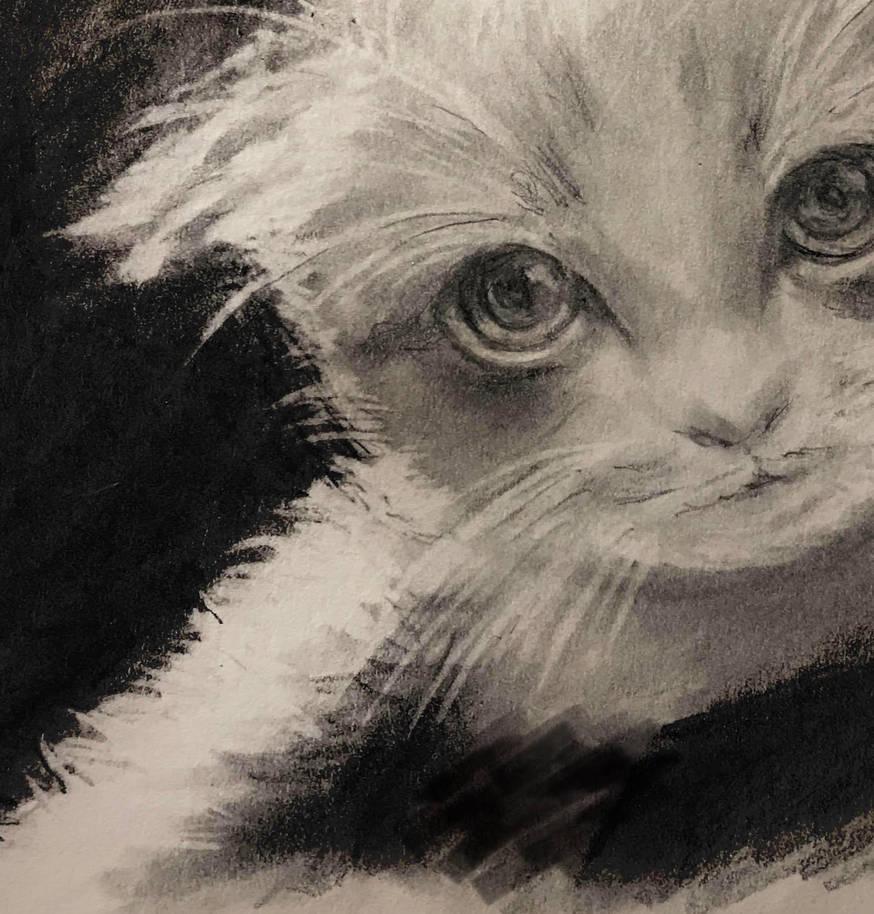 Kitten  by miladyartist