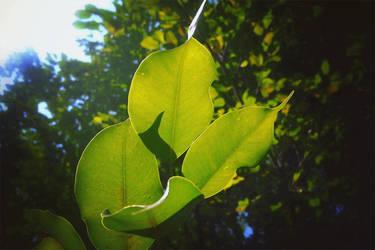 leaf by CKMargot