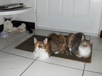 Cat Cat Cat by Oriana-X-Myst