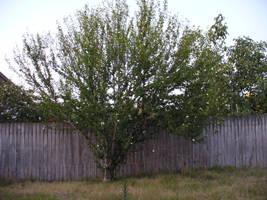 My tree... Well, one of them. by IAmMarauder