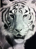 Bengal Tiger (Charcoal Drawing) by TrebleSketchOfficial