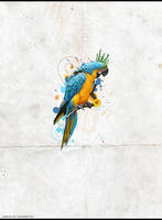 The Parrot by jaffar-style