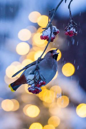 bird by markotapio