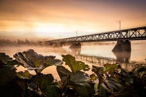 bridge by markotapio