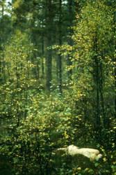 In the woods ii by torveniusphoto