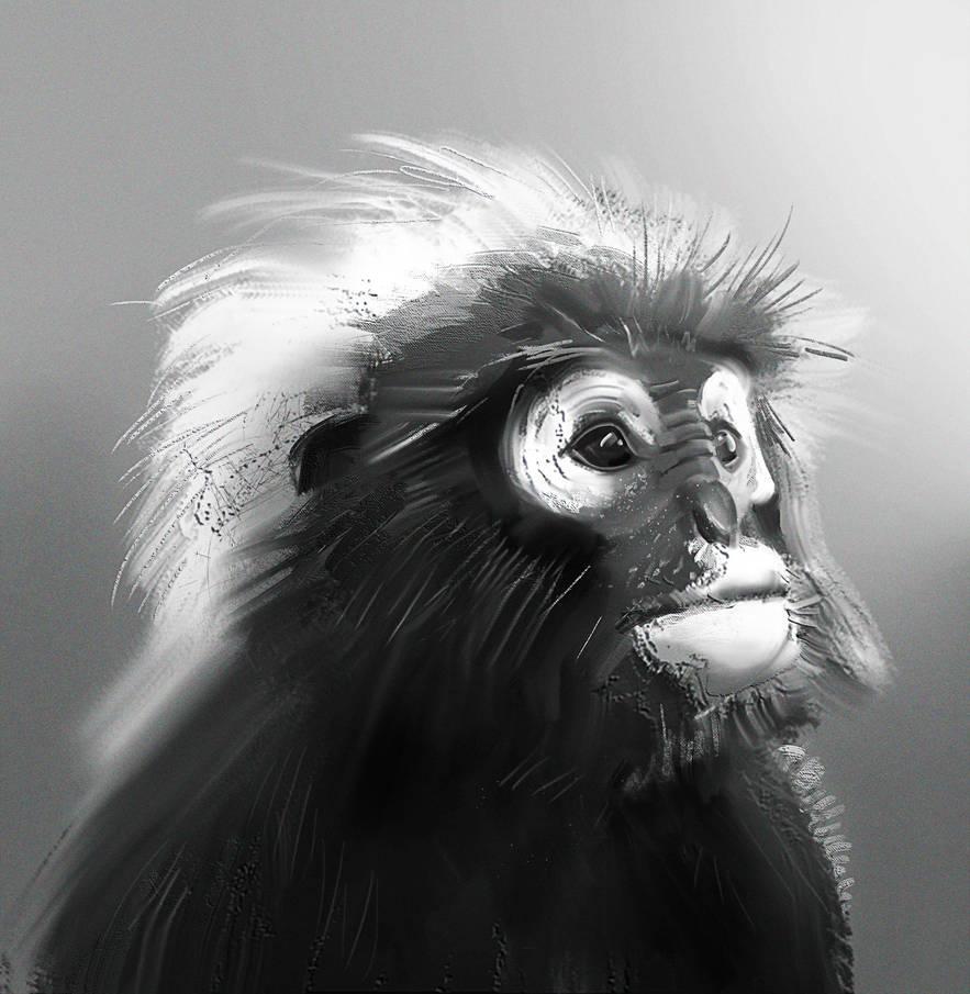 Monkey by monsta87