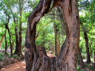 Tree With A Hole by sandeep-hegde