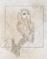 Owl, movement 3 by Steverowlatt