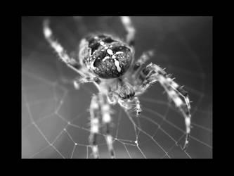 Arachnid by OurHeroXero