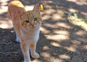 Nice cat by juliguilty
