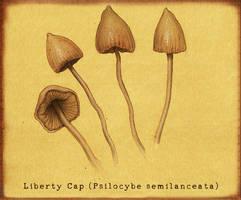 Liberty Cap Mushroom by Si1verange1