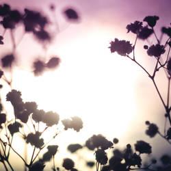 Morning. by micky3846