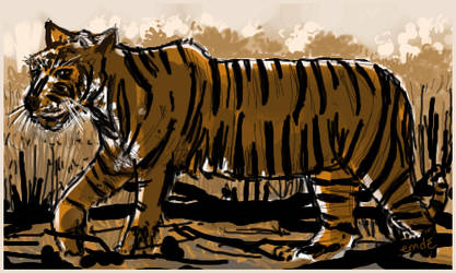 Tigre by gribouille