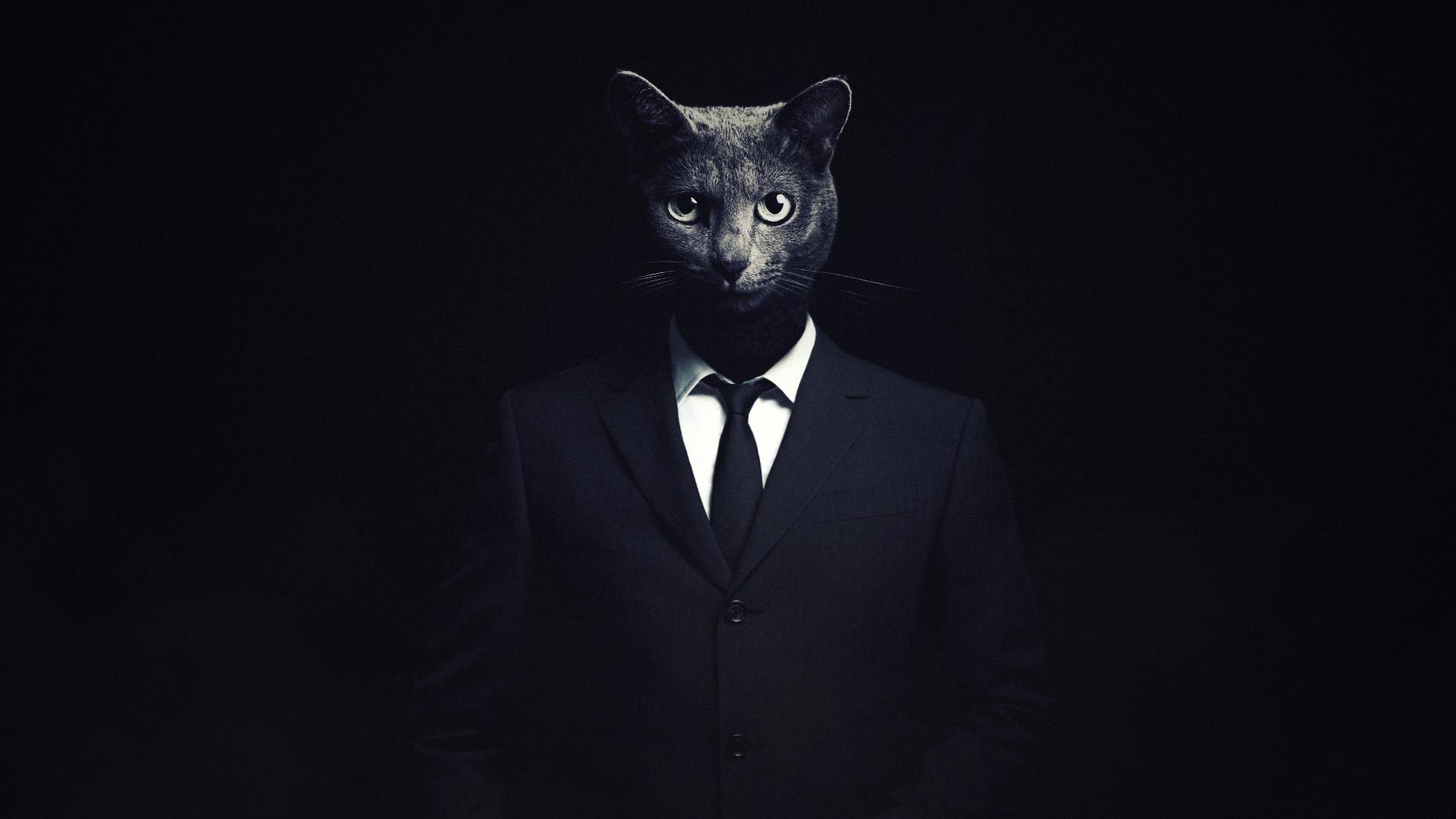 Cat The Killer By Hshamsi On Deviantart