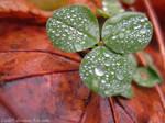 Luck -1 by Lisl89
