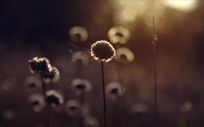 jeg slikker regn og lyn. by Luincale