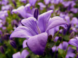 Purple Flower by jellybear07