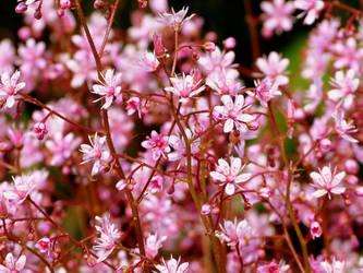 Pink by jellybear07