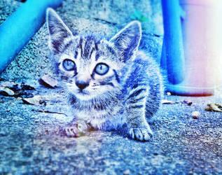 Blue cat Wallpaper by iPurpl3X