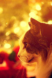Christmas cat by soyotome