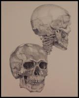 Anatomy : the human skull by tberardi