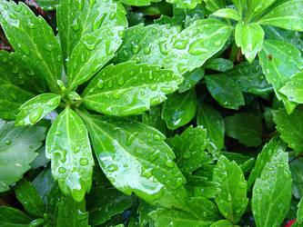 Fresh Greens by fakingthebooks