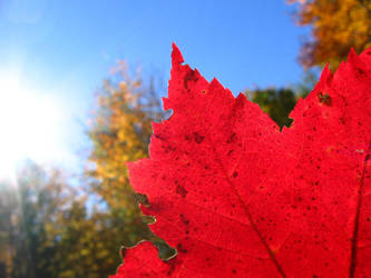 Red Fall by fakingthebooks