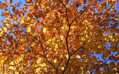 Golden Fall by fakingthebooks