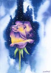 Nebula Rose by LucieOn