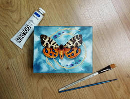 Butterfly Box by LucieOn