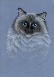 Ragdoll Cat by LucieOn