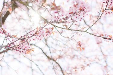 spring blossom by netflash33