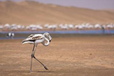 flamingo by netflash33