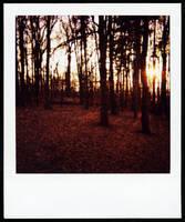 dusk by netflash33