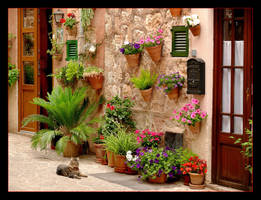 Cat, Colors And Charming Street In Valldemossa by skarzynscy