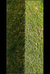 Green And... Green by skarzynscy