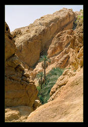 A Touch Of Green In The Desert (Analog Photo) by skarzynscy