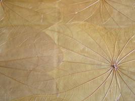 Texture 3 - leaf veins by chop-stixtures