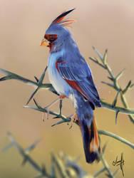 2018_17 Desert Cardinal by JonathanL96