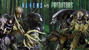 Aliens vs Predators by AntonellisofbBender