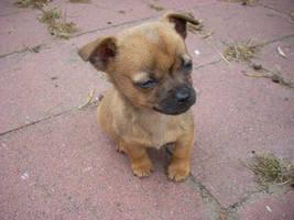 Puppy by fuzzieduck