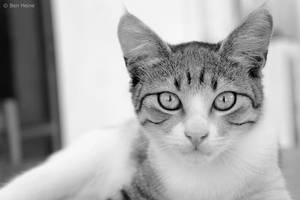 Abandoned Cat - 1 by BenHeine
