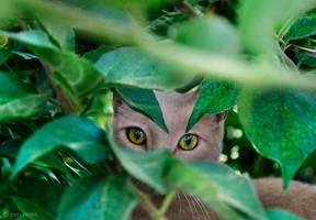 Abandoned Cat - 3 by BenHeine