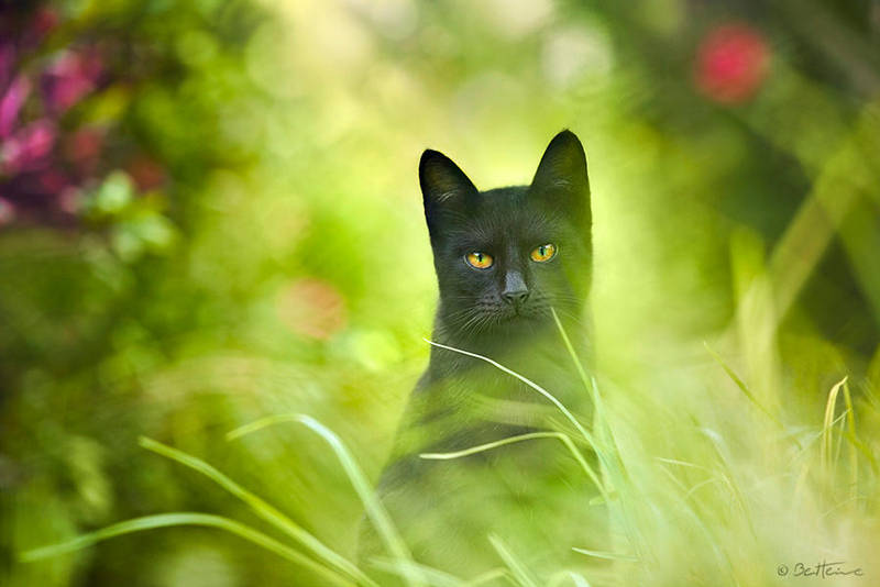 Black Cat by BenHeine
