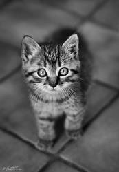 Cute Kitty by BenHeine