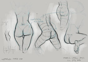 anatomy study 2 by gastrovascular