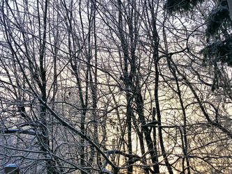 #Winter #Trees and #Sky by ubinko